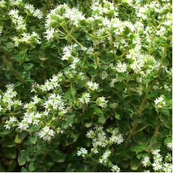 Oregano essential oil 20ml
