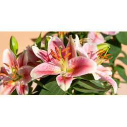 Lily essential oil 20ml